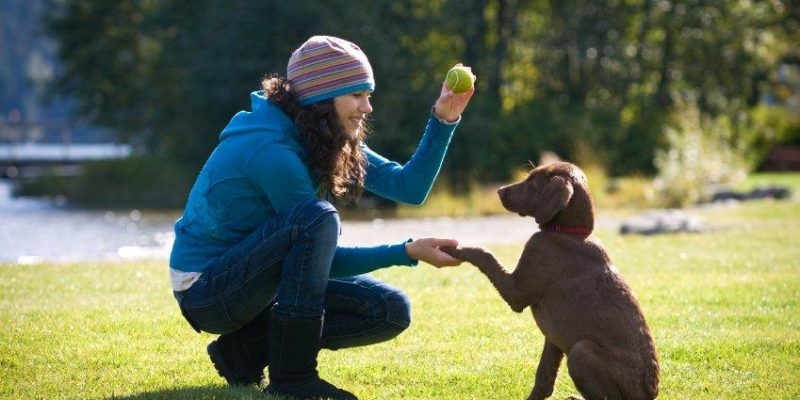 Here Are Reasons to Train Your Puppy