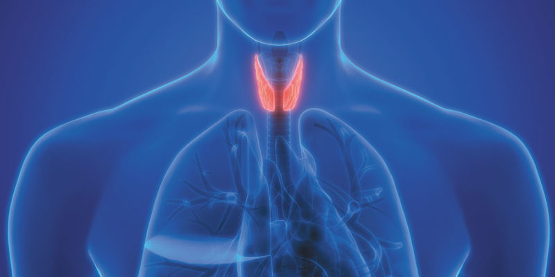 Underactive Thyroid Gland: What Causes It?