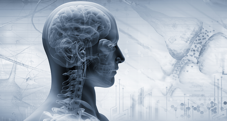 What Role Does the Vagus Nerve Play in Our Lives?