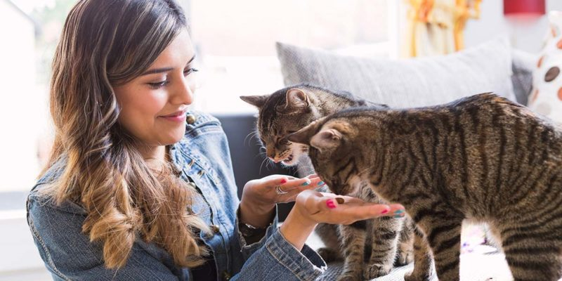 How to Use CBD Oil for Cats?