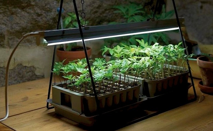 LED_grow_lights_tech.jpg